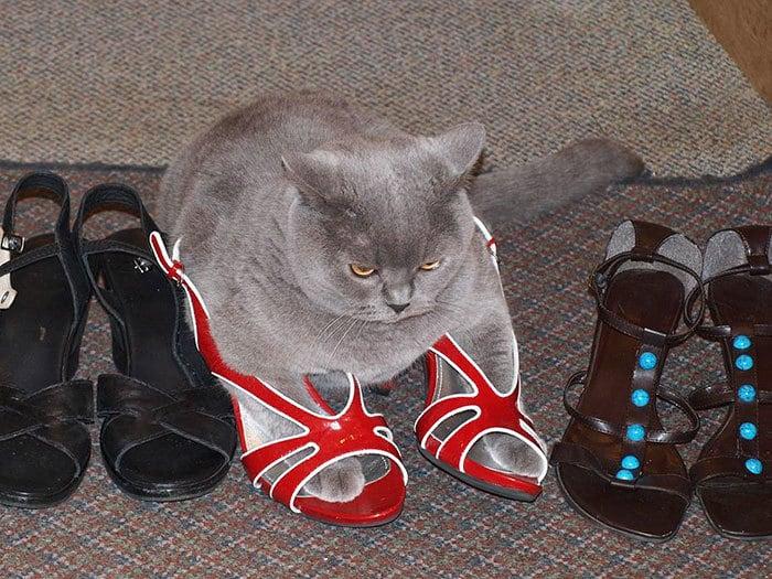 коты в маленьких коробках приколы (12)