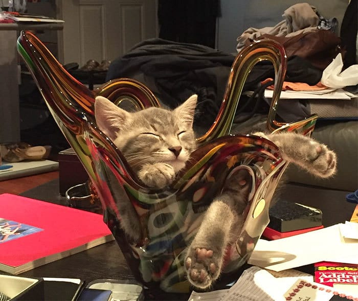 коты в маленьких коробках приколы (13)