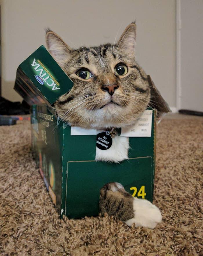 коты в маленьких коробках приколы (15)