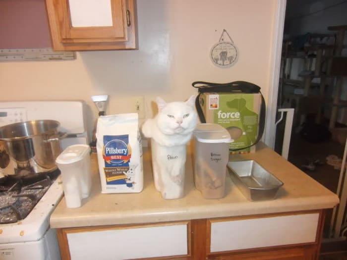 коты в маленьких коробках приколы (16)