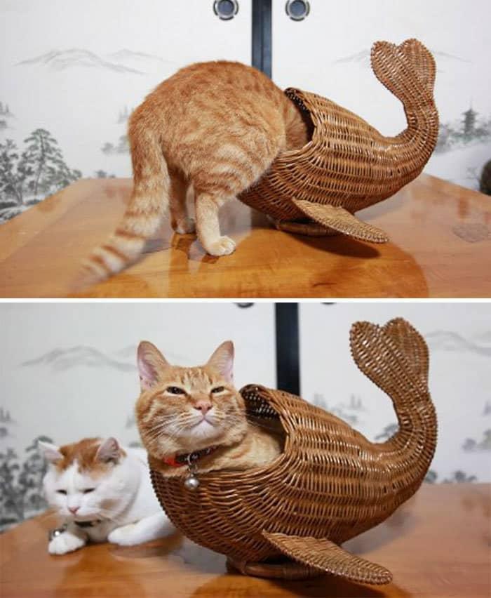 коты в маленьких коробках приколы (17)