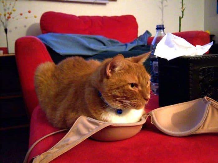 коты в маленьких коробках приколы (3)