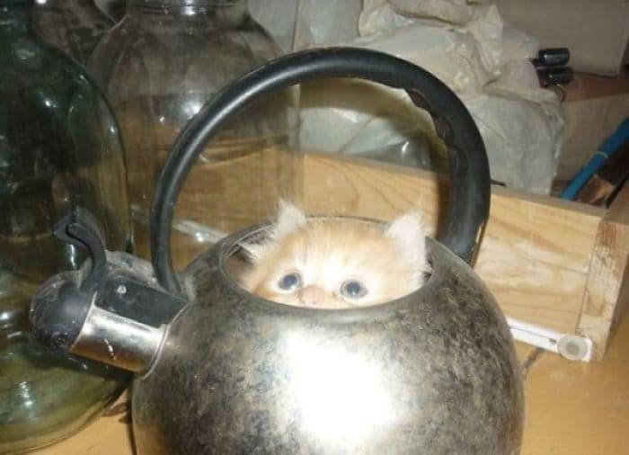 коты в маленьких коробках приколы (4)