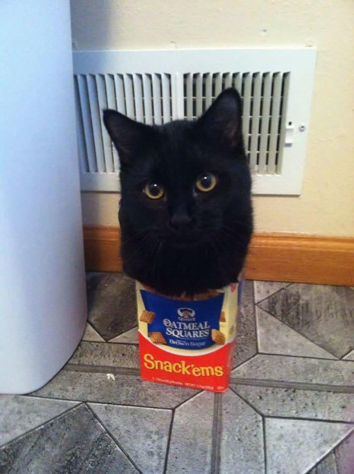 коты в маленьких коробках приколы (7)