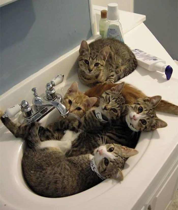 коты в маленьких коробках приколы (8)