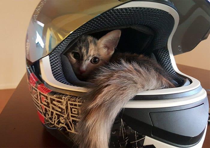 коты в маленьких коробках приколы (9)