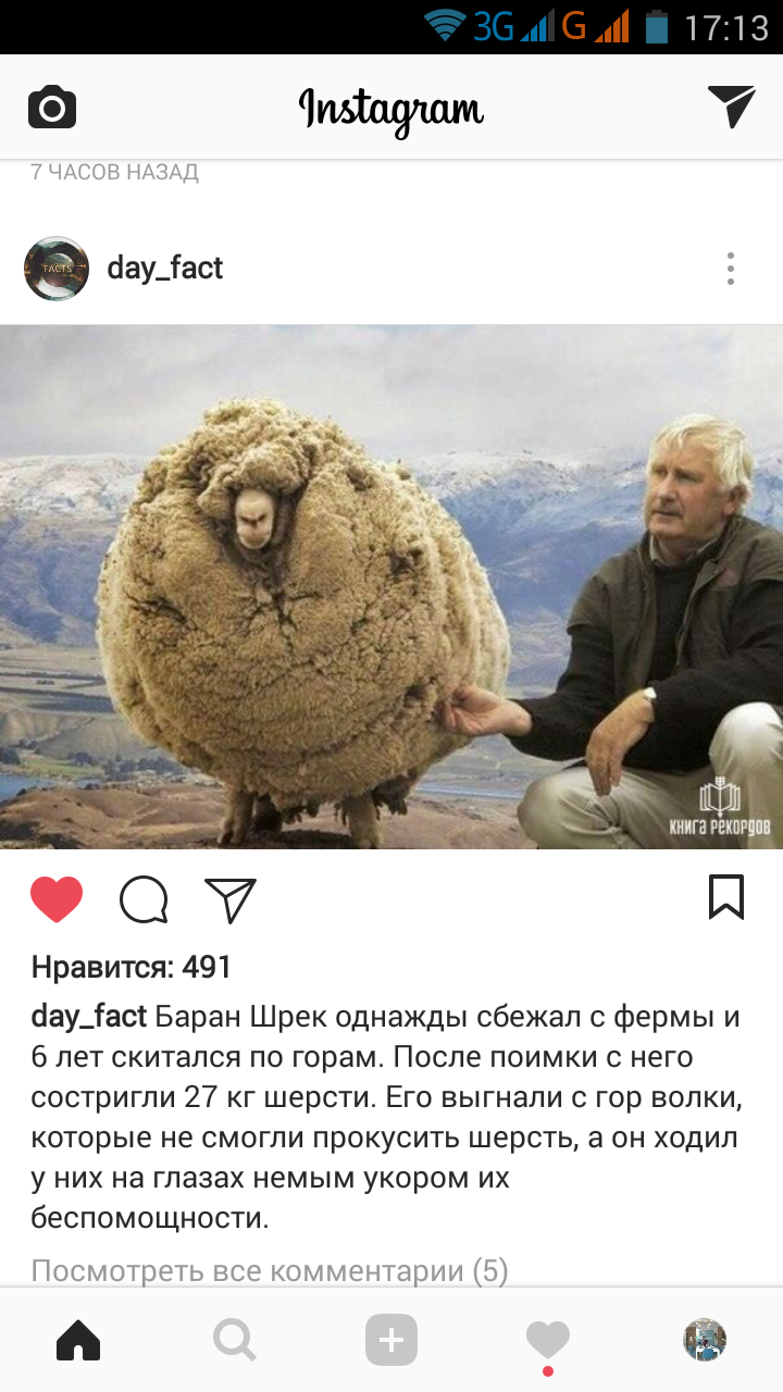 баран Шрек