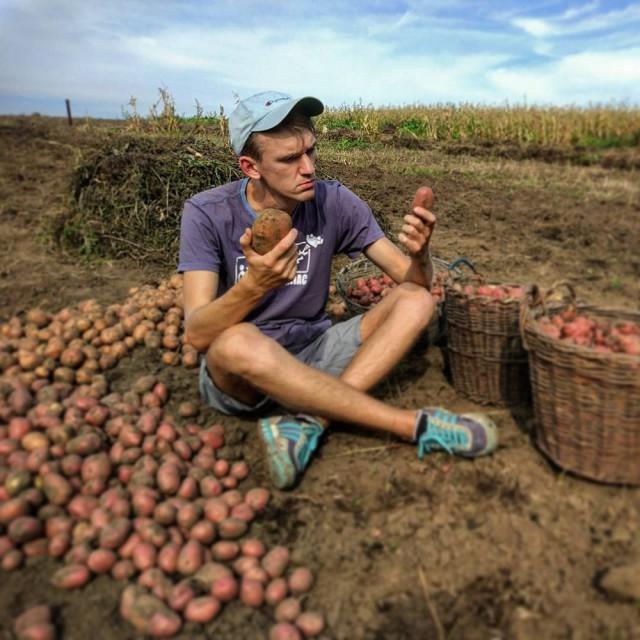 белорусы и картошка фото (15)