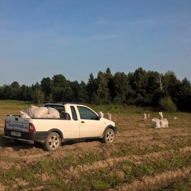белорусы и картошка фото (17)