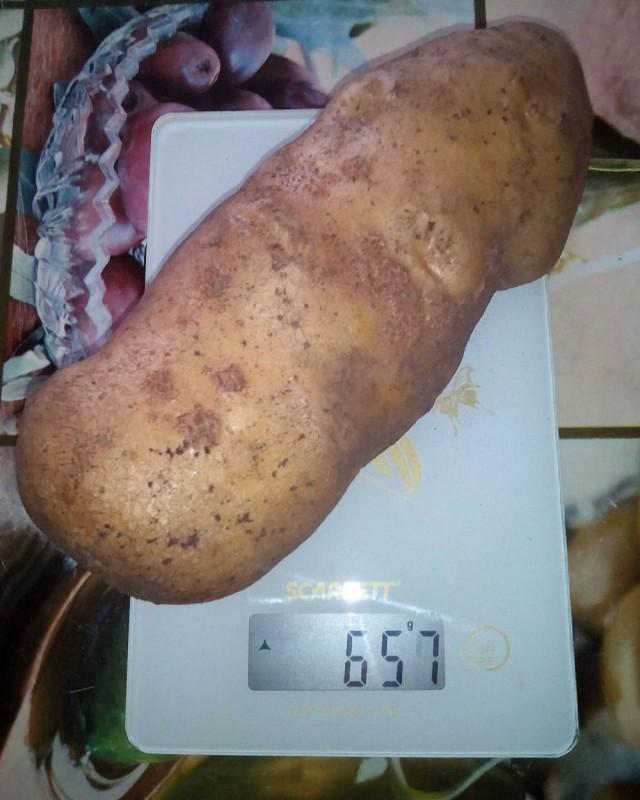 белорусы и картошка фото (18)