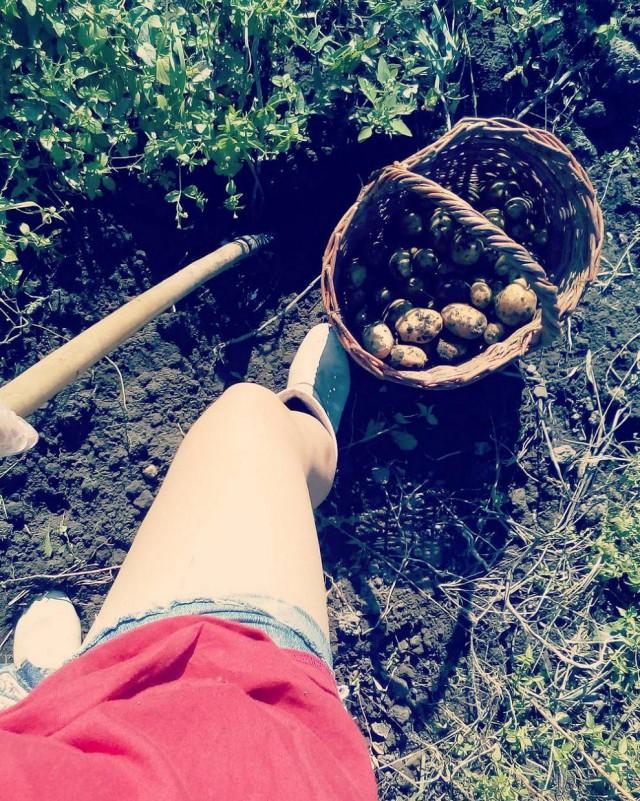 белорусы и картошка фото (21)