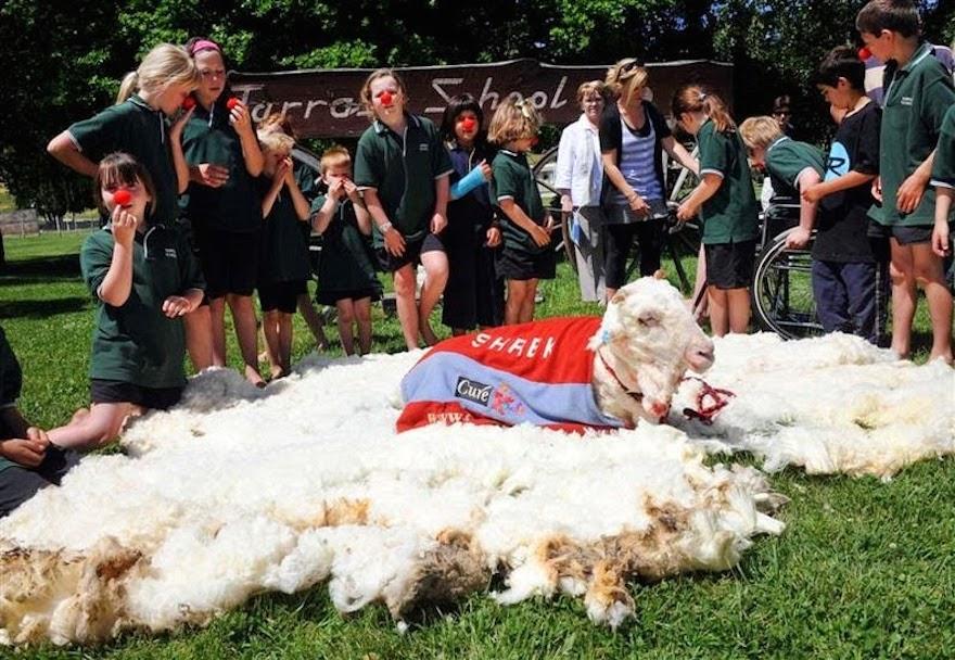 шрек овца