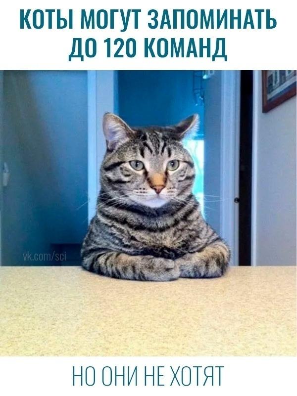 мемасы про котиков (1)