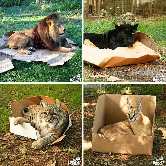 мемасы про котиков (11)