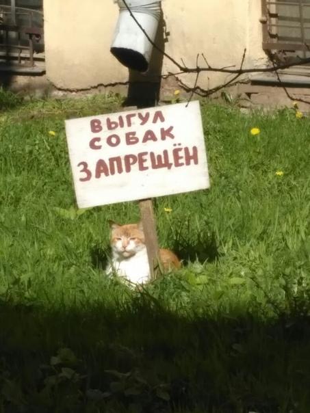 мемасы про котиков (12)