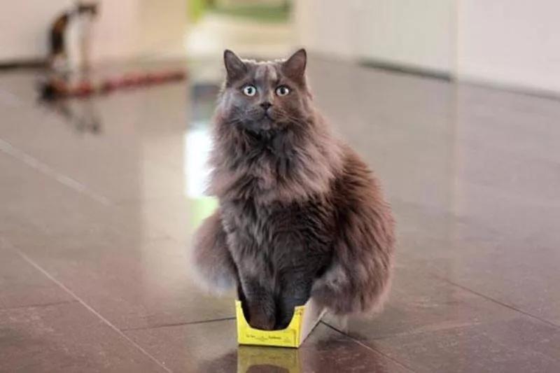 мемасы про котиков (2)
