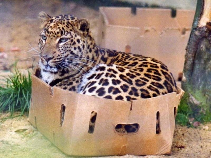 мемасы про котиков (5)