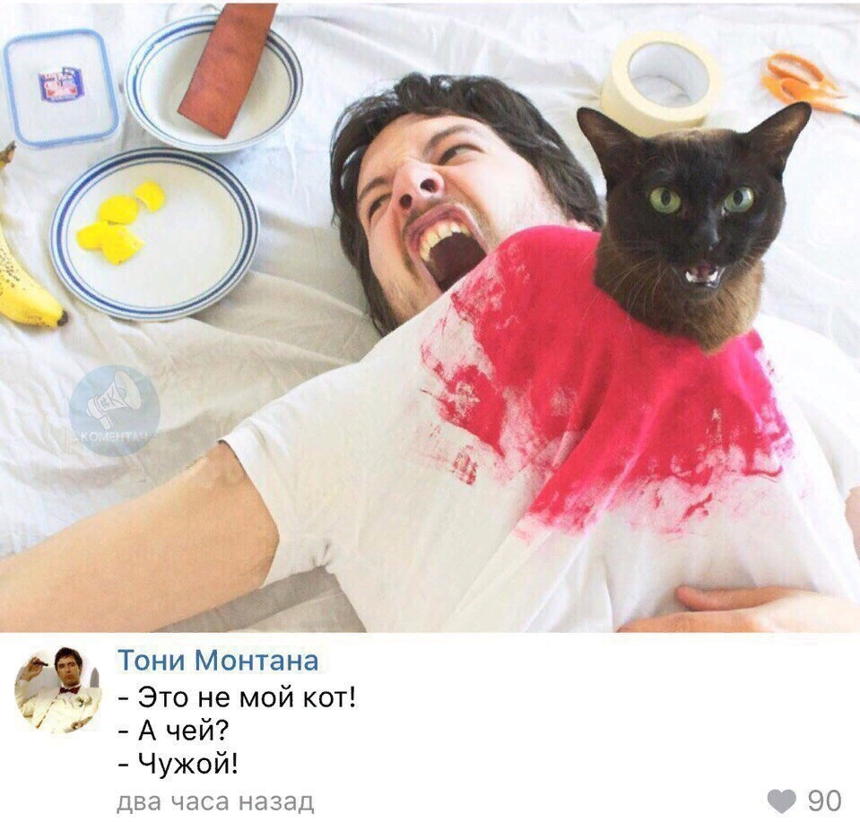 мемасы про котиков (8)