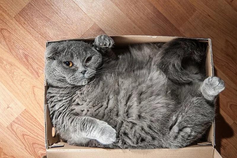 мемасы про котиков (9)
