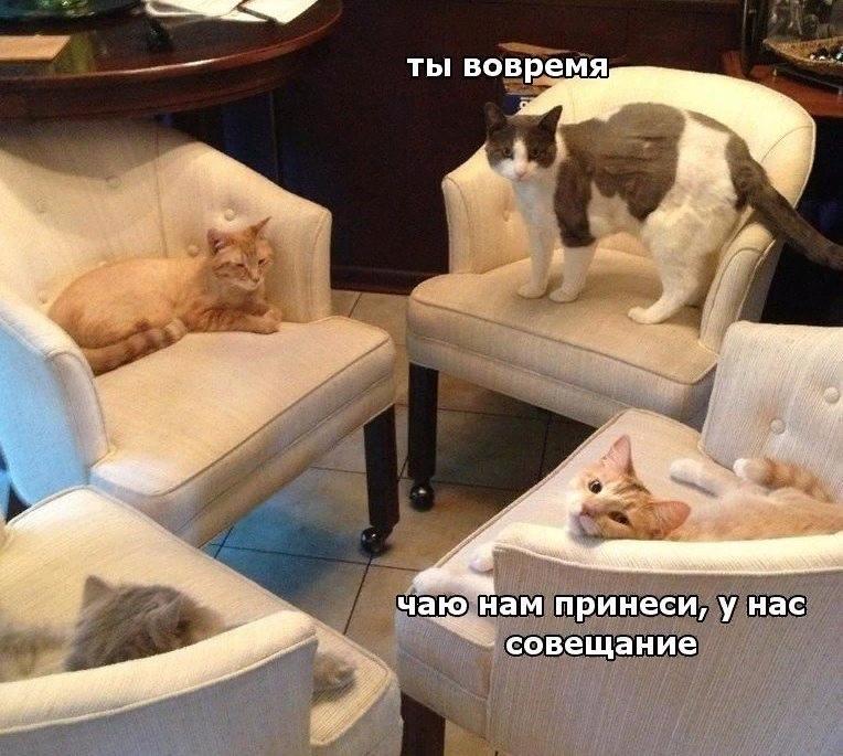свежие приколы в Вконтакте (40)