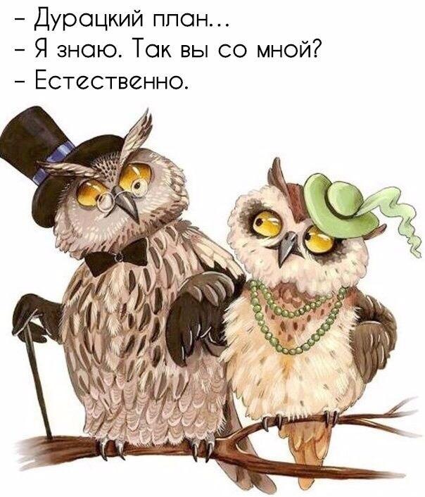 свежие приколы в Вконтакте (43)