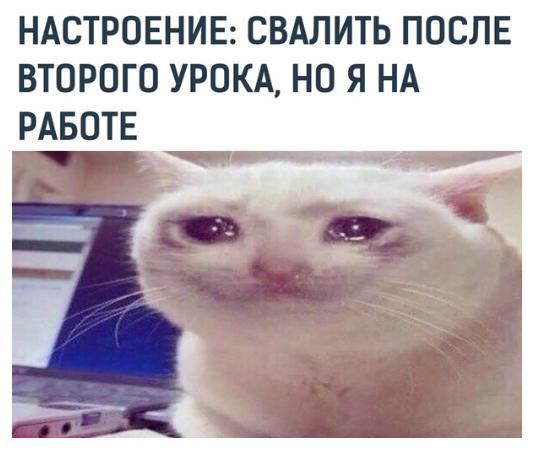 приколы мемы июль 2019 (19)