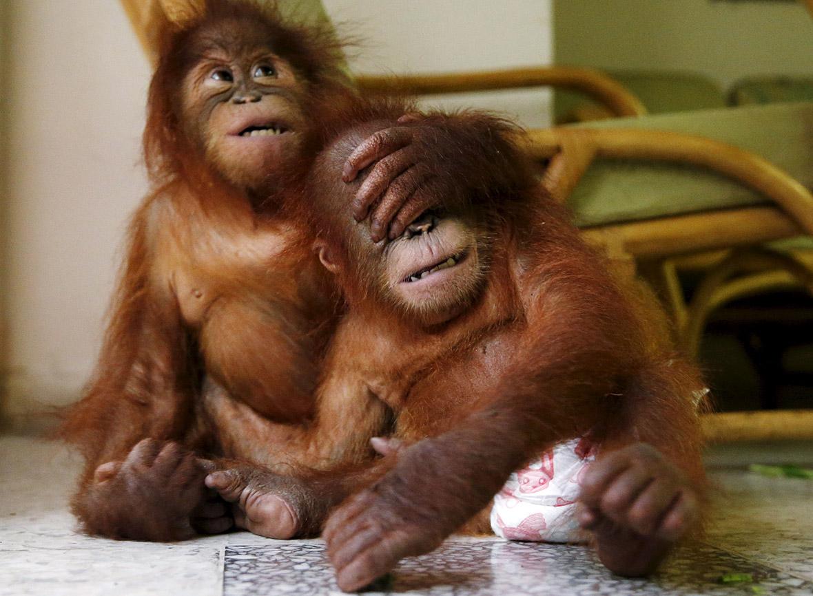 Фото милых животных (1)