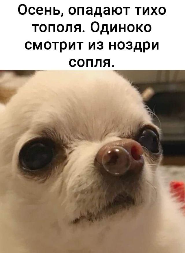 мемы и приколы 2021 январь-февраль (55)